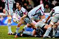 WWW.REGARDS DU SPORT-VANDYSTADT.COM Photos rugby Top 14 Bourgoin CSBJ